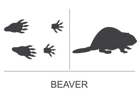 Silhouette of a beaver and prints of the hind and fore paws. Vector illustration on a white background.