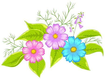 cosmos flower: Flowers cosmos, vector, multi-coloured petals and green leaves, isolated