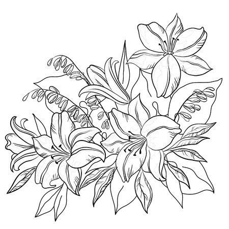 monocrom�tico: Flowers and leaves lily and mine, vector, monochrome contours