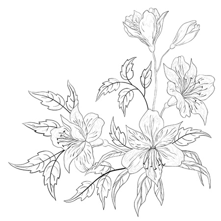 alstroemeria: Flowers alstroemeria, vector, monochrome contours on a white background Illustration