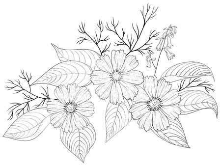 cosmos flower: Flowers cosmos, vector, petals and leaves, graphic monochrome contours, isolated
