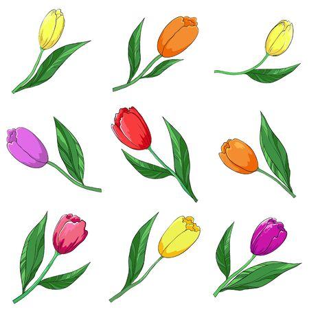 azahar: Flores, tulipanes multicolores, vector, aislados en un blanco, establecer Vectores