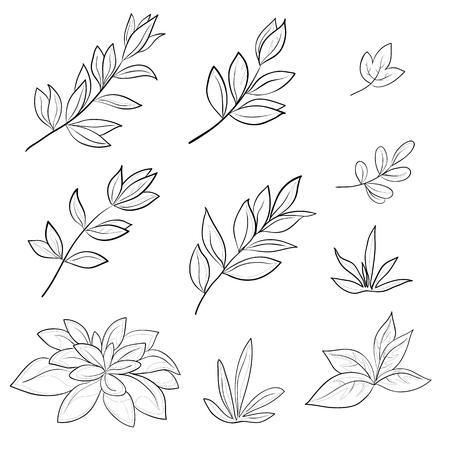 sketch pattern: Leaves of various plants, set vector contours on a white background