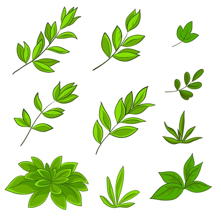 verdure: Summer green leaves of various plants on a white background, vector, set