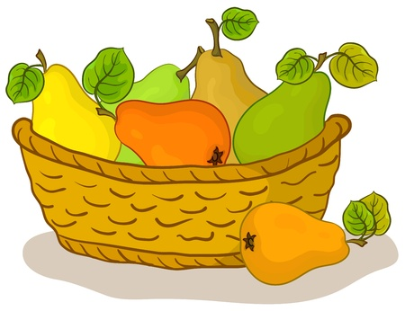 basket with fruits, sweet pears with green leaves Vector