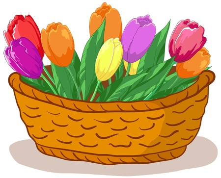 Vector, wattled basket with flowers tulips and green leaves Stock Vector - 9546913