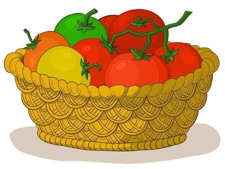 Vector, wattled basket with various fresh raw tomatoes Vector