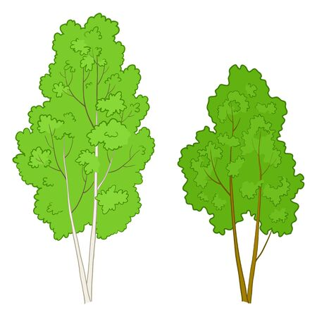 Vector, the forest green deciduous trees isolated on a white background Vector