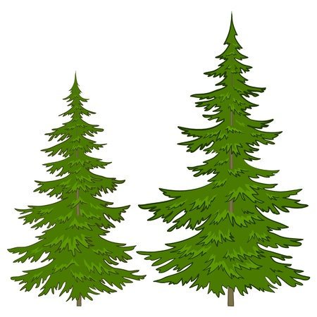 pine: Trees, vector, christmas green fur-trees, isolated on a white background