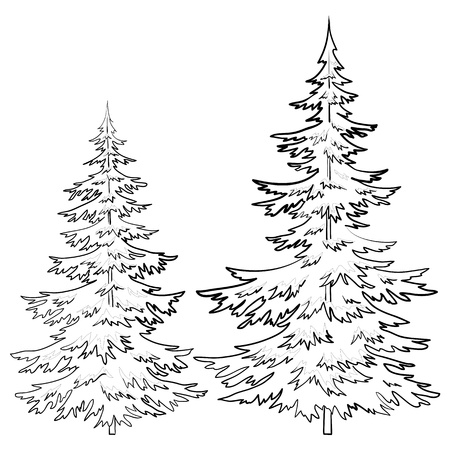 evergreen: Trees, fur-tree, vector, christmas winter symbol, isolated, contours