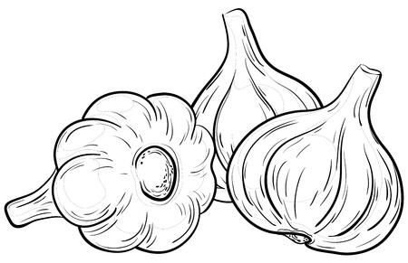 ajo: Vegetales, especias, tres ajos, vector, contorno monocroma en blanco Vectores
