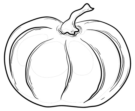 dynia: Vegetable, pumpkin, vector, monochrome graphic contours on white background Ilustracja