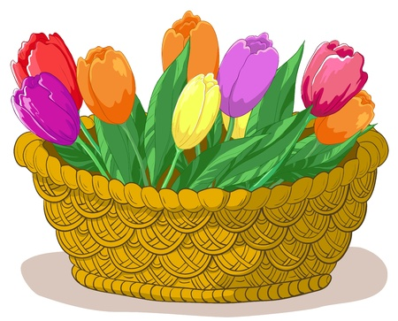 Vector, wattled basket with flowers tulips and green leaves Vector