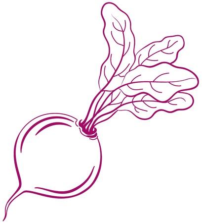 beetroot: Vector, hortalizas, remolacha con hojas, monocromo pictograma simb�lica, aislado en blanco