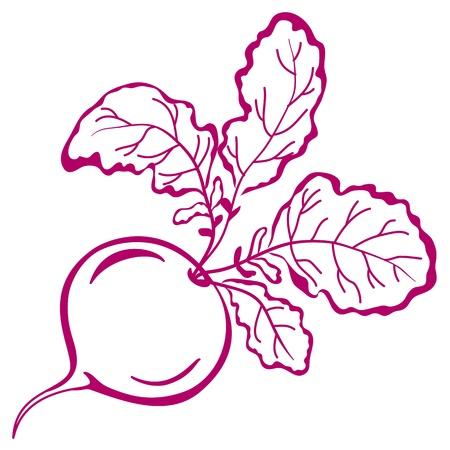 Plantaardige, rode radijs met bladeren, vector, symbolisch zwart-wit pictogram Vector Illustratie