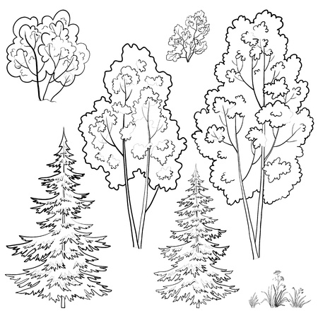 Vector, plants: trees and flowers, monochrome contours on a white background Stock Vector - 10087501