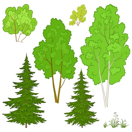 coniferous forest: Vector, plantas: árboles y flores, aislados en un fondo blanco