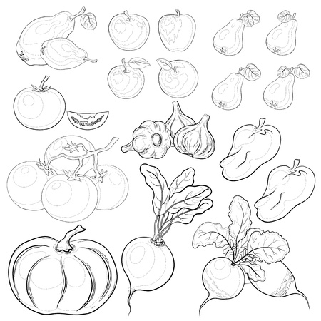 radish: Vector, set: various vegetables and fruits, monochrome contours Illustration