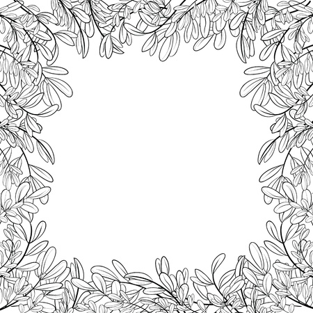 Vector background with a border of leaves of plants, contours Vector