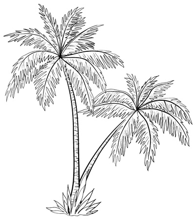 Vector, palm trees with leaves, monochrome contours on white background