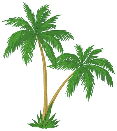 carribean: Vector, palm trees with green leaves on white background Illustration