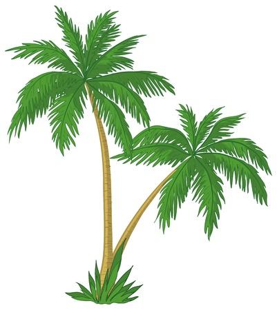 arboles de caricatura: Vector, palmeras con hojas de color verde sobre fondo blanco Vectores