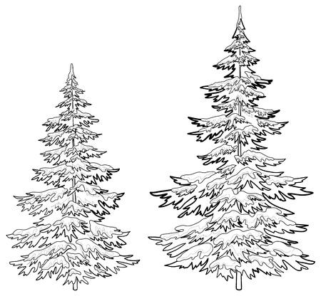 fur tree: Vettore, alberi di Natale sotto la neve su sfondo bianco, contorni