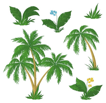 palm leaf: Palm trees, flowers and green grass on white background.  Illustration