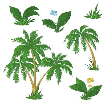 palm frond: Palme, fiori e l'erba verde su sfondo bianco. Vettoriali