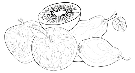 still life food: Still life, food, various fruits, contours on a white background: apples, pears, kiwi. Vector
