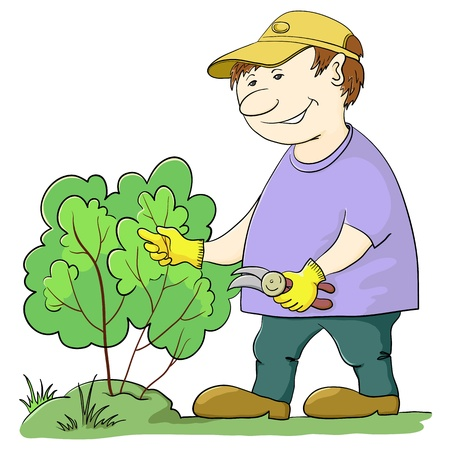 Man gardener works in a garden, cuts a bush with secateurs Vector