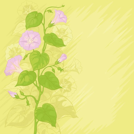 morning glory: Yellow background with Ipomoea flowers and leaves. Vector Illustration