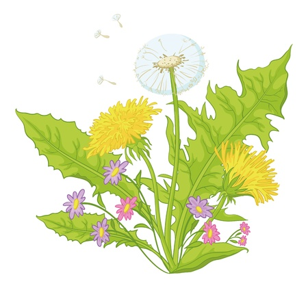Flowers dandelions with green leaves, yellow, and with seeds  Vector Stock Vector - 12886923