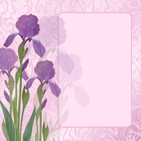 Flowers iris and green leaves on pink background with frame and curves  Vector eps10 Vector