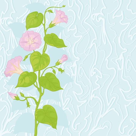 Ipomoea flowers and leaves on blue background with white curves  Vector Vector