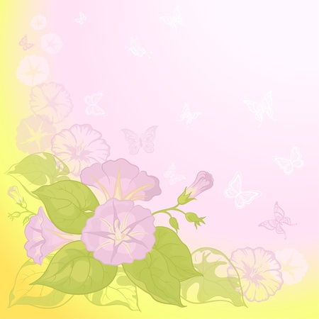 ipomoea: Ipomoea flowers and butterfly silhouettes on yellow and pink background  Vector Illustration