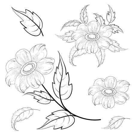 dalia: Flores y hojas de dalia, contornos negros sobre fondo blanco Vectores