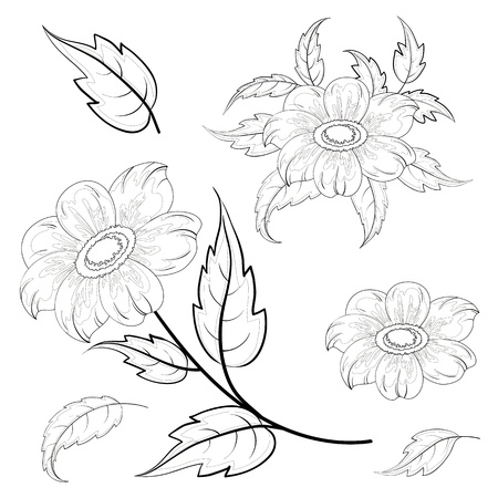Flowers and leaves dahlia, black contours on white background   Illustration