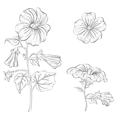 Flowers mallow, black contours on white background Vector