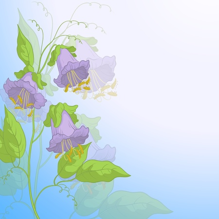 kobe: Flowers kobe, lilac petals and green leaves on background of blue sky, Illustration