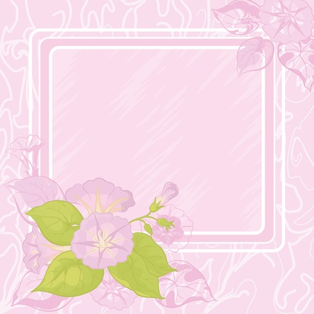 morning glory: Pink - white background with frame and flowers Ipomoea  Illustration