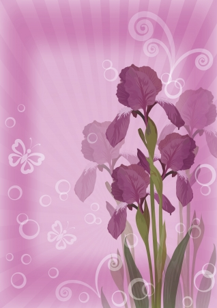 Flower lilac background for greetings card with iris, butterflies, rays, circles and figures, contains transparencies Vector