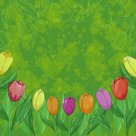 Tulips flowers, leafs and contours on abstract green background   Stock Vector - 14130109