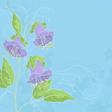 Flowers kobe, lilac petals and green leaves on background of blue sky  Stock Vector - 14130115