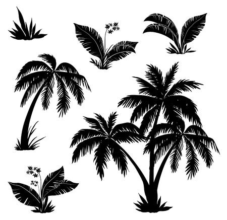 cocotier: Des palmiers, des fleurs et des herbes, des silhouettes noires sur fond blanc Illustration