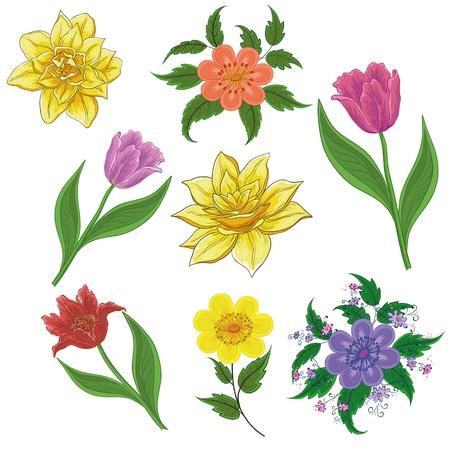 Set of flowers isolated on white background  tulip, narcissus, symbolical  Vector illustration Illusztráció