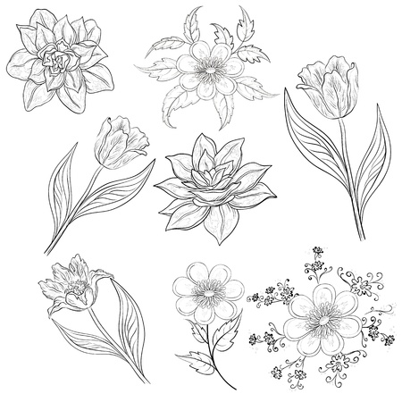 Set of flowers  tulip, narcissus, symbolical  Black contour on white background  Vector illustration Illustration