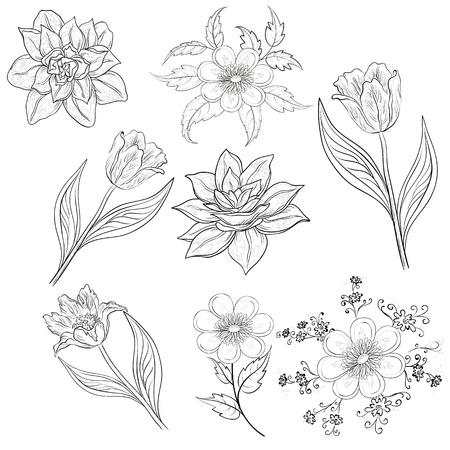narcissus: Set of flowers  tulip, narcissus, symbolical  Black contour on white background  Vector illustration Illustration