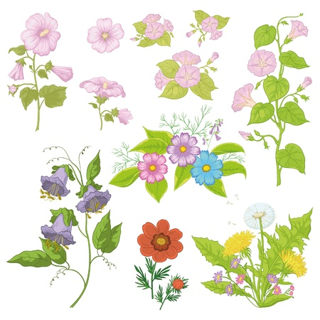 mallow: Set of flowers isolated on white background  cosmos, mallow, ipomoea, adonis, dandelion, kobe