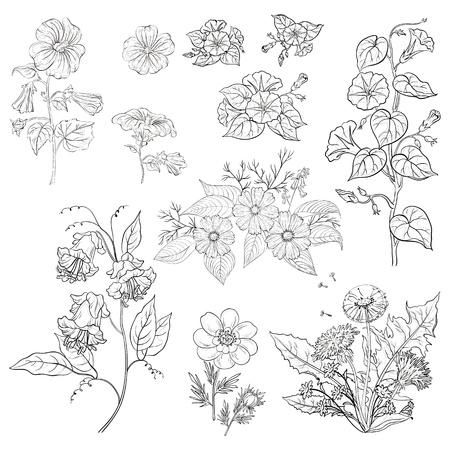 cultivating: Conjunto de flores aisladas sobre fondo blanco cosmos, malva, Ipomoea, Adonis, el diente de le�n, de Kobe, el contorno negro sobre fondo blanco